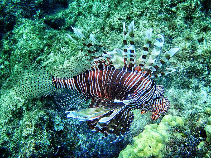 red sea snorkeling egypt underwater-pictures with a olympus though