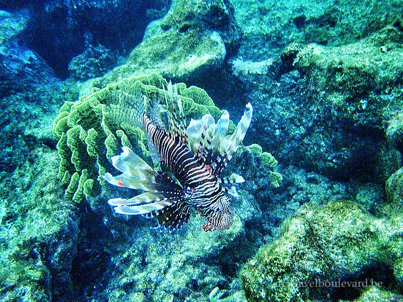red sea snorkeling egypt