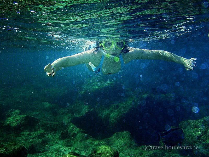 red sea snorkeling egypt