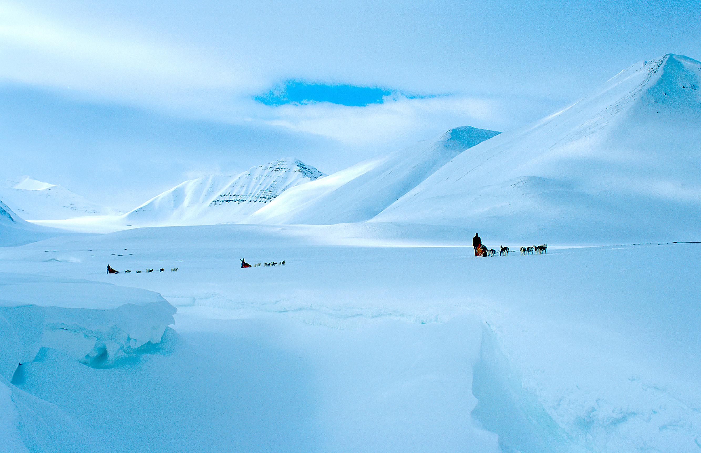huskyteams in snowlandscape
