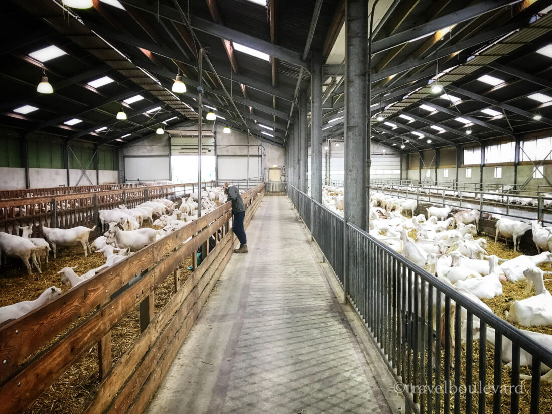 Goeree-Overflakkee Geitenboerderij Mekkèrstee